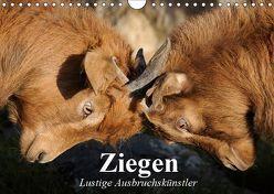 Ziegen. Lustige Ausbruchskünstler (Wandkalender 2019 DIN A4 quer) von Stanzer,  Elisabeth