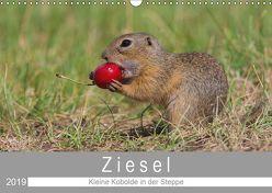 Ziesel – Kleine Kobolde in der Steppe (Wandkalender 2019 DIN A3 quer) von Trunk,  Alfred