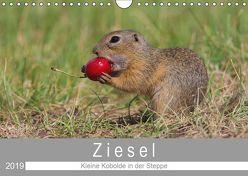 Ziesel – Kleine Kobolde in der Steppe (Wandkalender 2019 DIN A4 quer) von Trunk,  Alfred