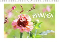 ZINNIEN (Wandkalender 2019 DIN A4 quer) von Kruse,  Gisela