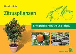 Zitruspflanzen von Beltz,  Heinrich