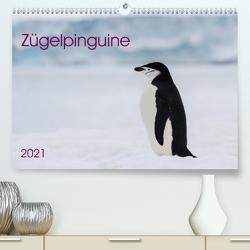 Zügelpinguine (Premium, hochwertiger DIN A2 Wandkalender 2021, Kunstdruck in Hochglanz) von Utelli,  Anna-Barbara