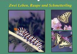 Zwei Leben, Raupe und Schmetterling (Wandkalender 2018 DIN A2 quer) von Reupert,  Lothar