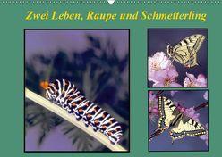 Zwei Leben, Raupe und Schmetterling (Wandkalender 2019 DIN A2 quer) von Reupert,  Lothar