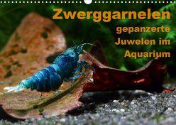 Zwerggarnelen – gepanzerte Juwelen im Aquarium (Wandkalender 2020 DIN A3 quer) von Franzmann,  Florian