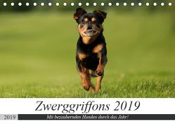 Zwerggriffons 2019 (Tischkalender 2019 DIN A5 quer) von Witt - Schomber,  Angelika