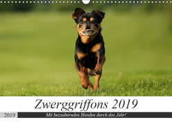 Zwerggriffons 2019 (Wandkalender 2019 DIN A3 quer) von Witt - Schomber,  Angelika