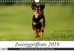 Zwerggriffons 2019 (Wandkalender 2019 DIN A4 quer) von Witt - Schomber,  Angelika