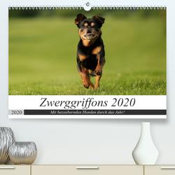 Zwerggriffons 2020 (Premium, hochwertiger DIN A2 Wandkalender 2020, Kunstdruck in Hochglanz) von Witt - Schomber,  Angelika